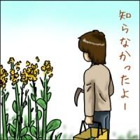 小松菜がボケて育ちすぎたらしい